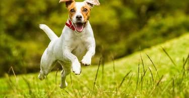basic dog training cues