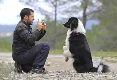 dogs behavior improving