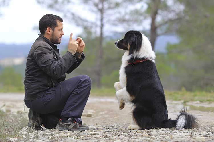 Dog's Behavior