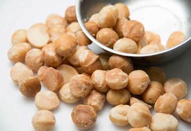 macadamia nuts dogs