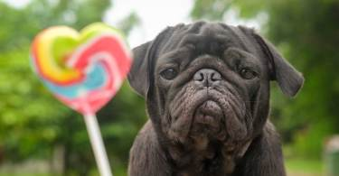 Dogs and Xylitol