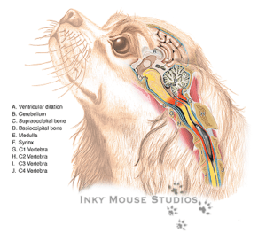 Graph showing the effects of syringomyelia in dogs