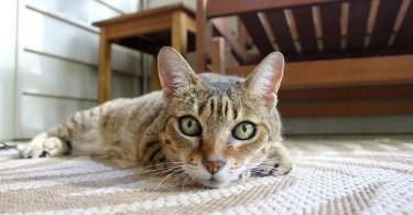 litterbox cat