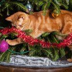 cat safe holiday decorating