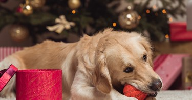 Dog Holiday Main Image