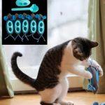 indoor cat hunter doc phoebe