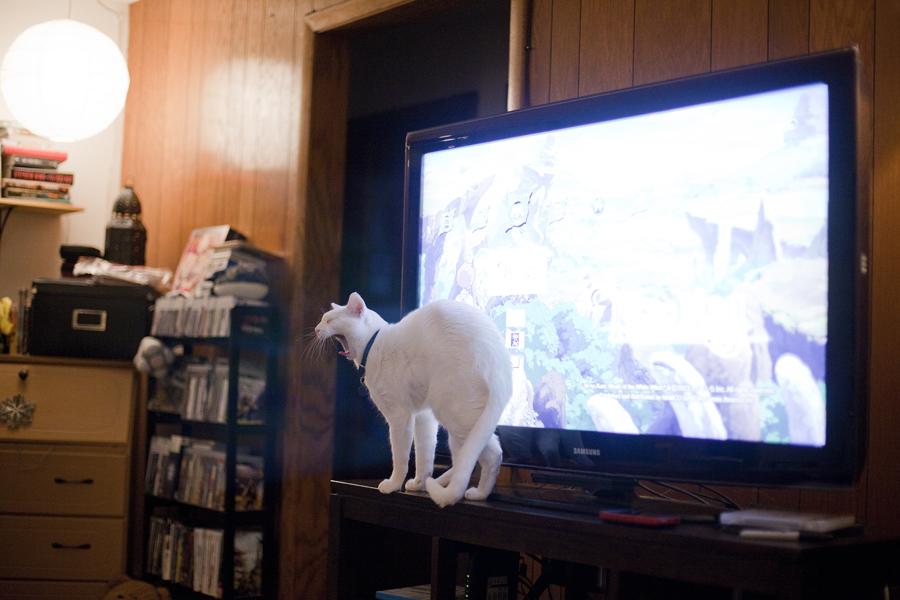 General the Siamese cat hogging the tv.