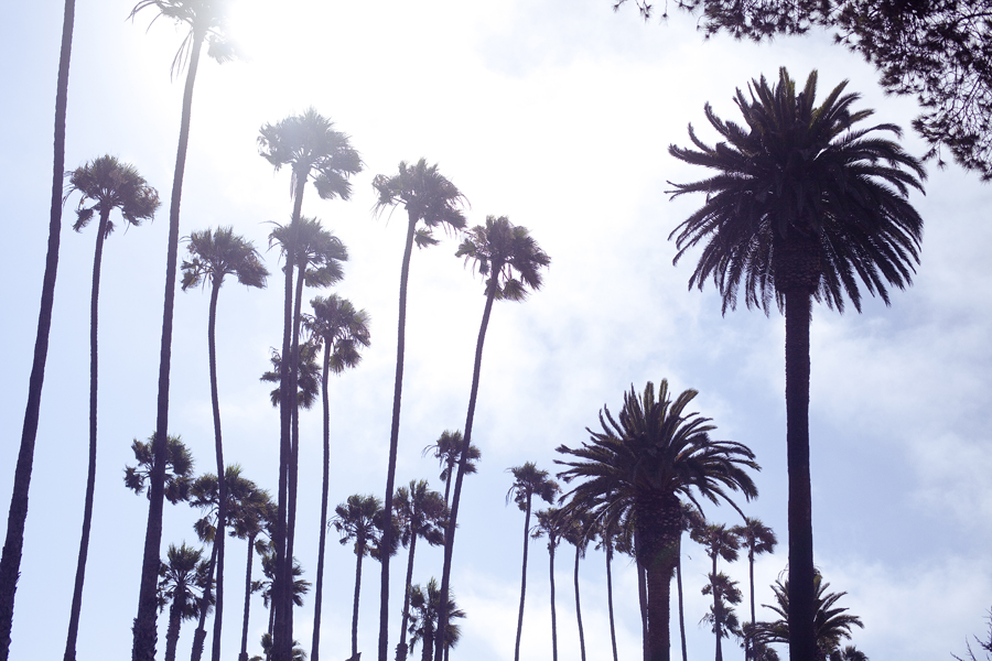 Silhouettes of palm trees at Santa Monica beach.