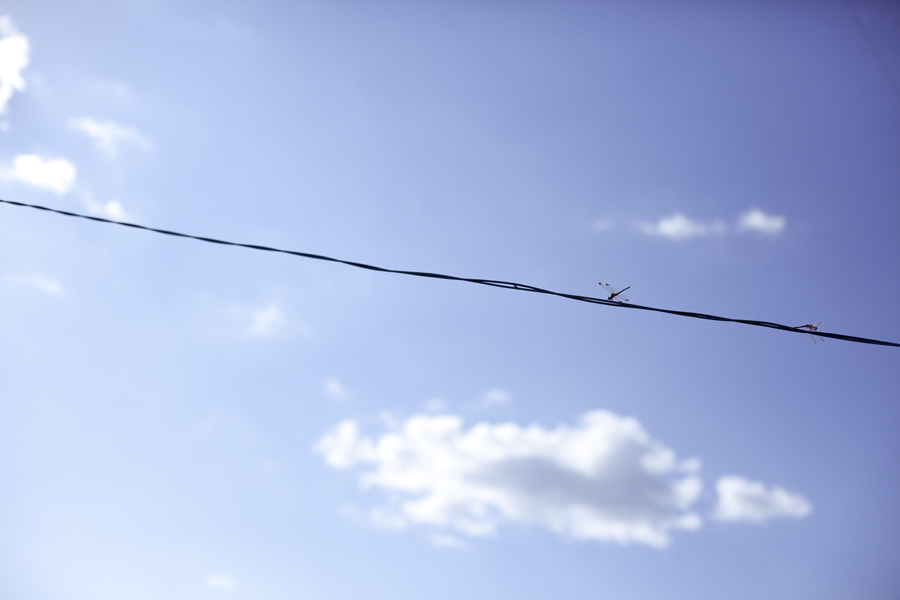 Dragonflies on wire.