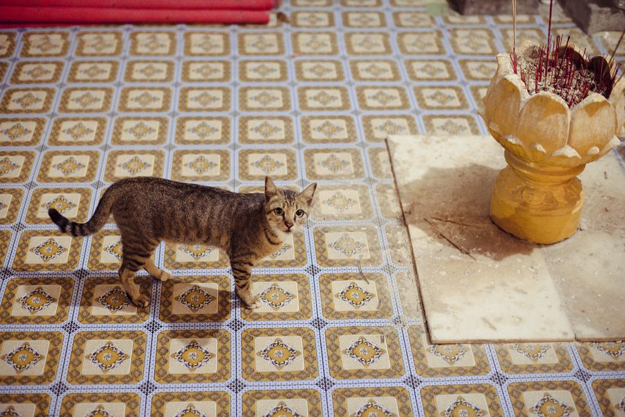 Kitty cat in Wat Phnom, Phnom Penh, Cambodia.