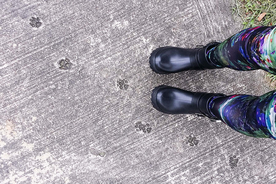 From where I stand with paw prints on the ground.