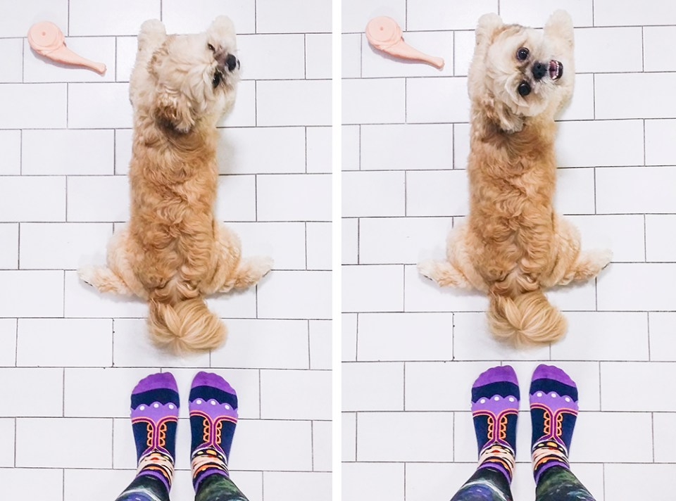 Collage with cute puppy in my socks.