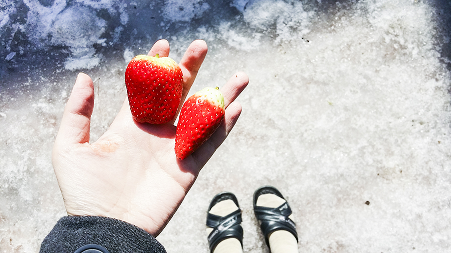 Strawberries to go in school, wearing school indoor slippers against ice-covered ground. Sangju South Korea.