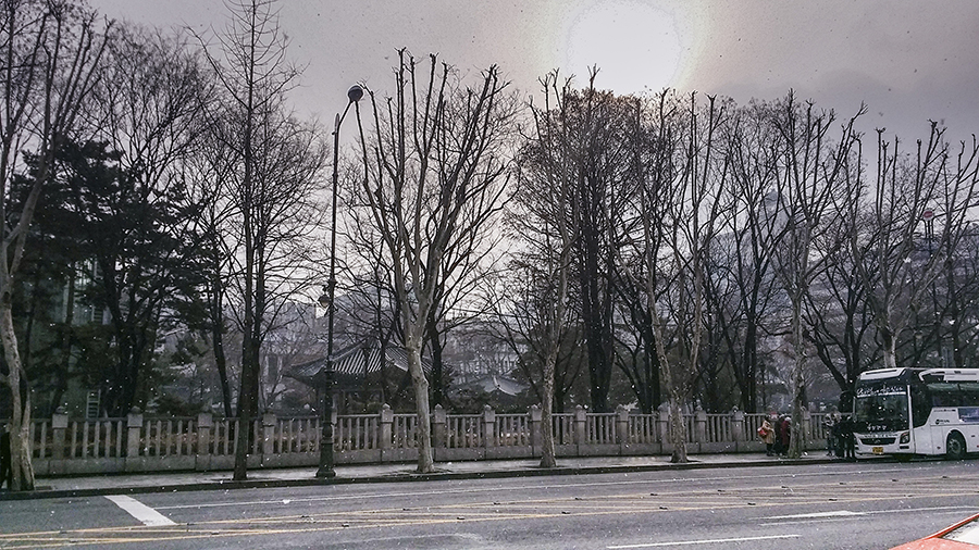Wintry scene with stark trees and our bus towards Nami Island, Gapyeong, South Korea.