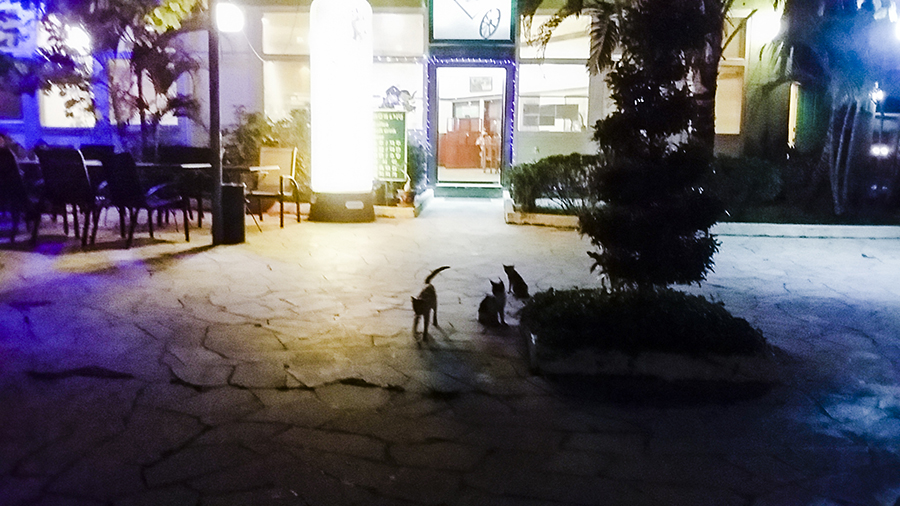 Family of cats at Harris Waterfront Resort, Batam, Indonesia.