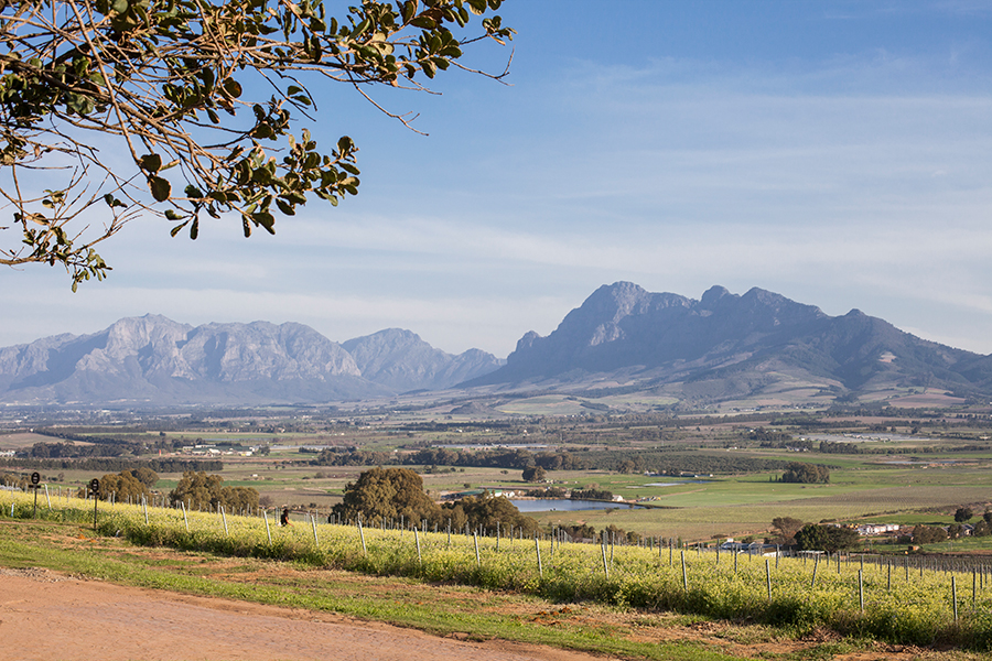 Mountains and fields at Fairview Wine and Cheese, South Africa.
