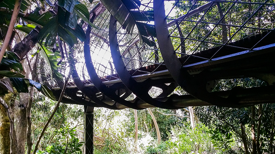 Underneath the Centenary Tree Canopy Walkway at Kirstenbosch, South Africa.