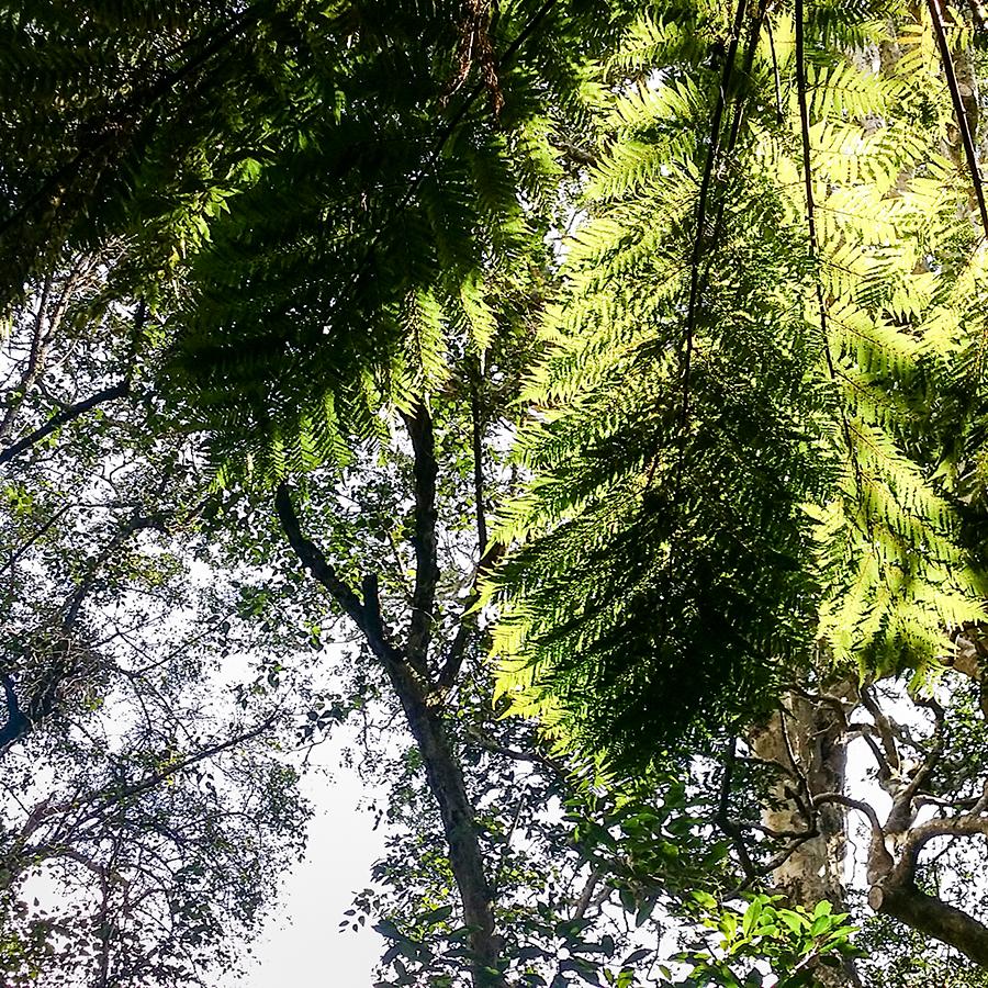 Foliage at Kirstenbosch, South Africa.