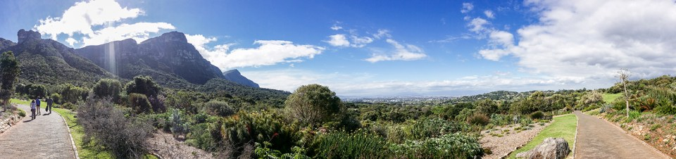 Landscape at Kirstenbosch, South Africa.