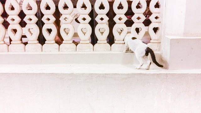Cat at Souq Waqif (سوق واقف), Doha, Qatar.