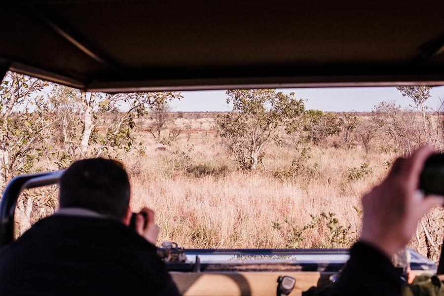 Capturing Cheetahs from our vehicle at Kruger National Park, South Africa.