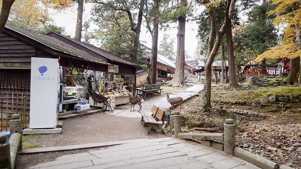 Otsuka shop at Nara Park, Japan. Photo by Shasha.