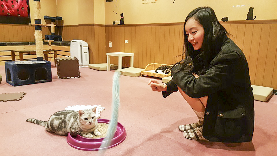 Trying to entice a kitty to play with me at Nyan Tsume, Osaka, Japan. Photo by Shasha.