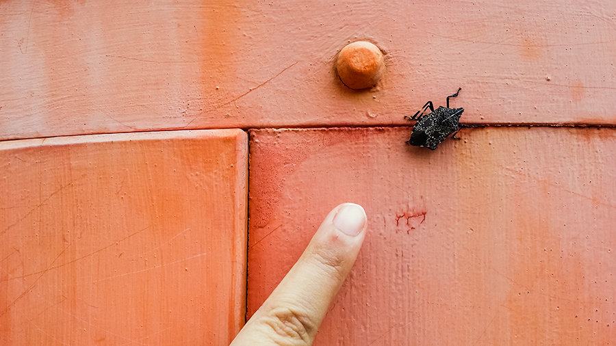 Ruru's finger for size comparison with an unidentified bug at Nara Park, Japan.
