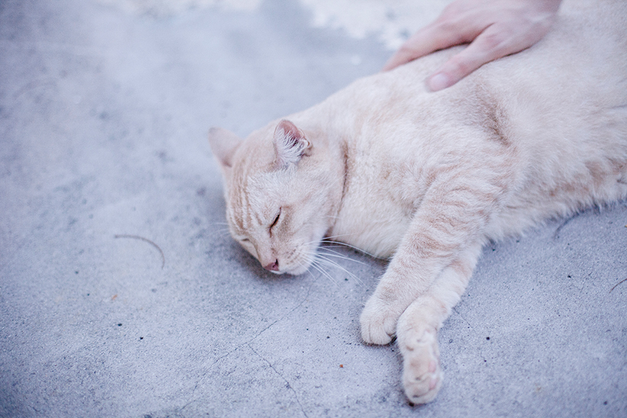 Petting neighbourhood cat.