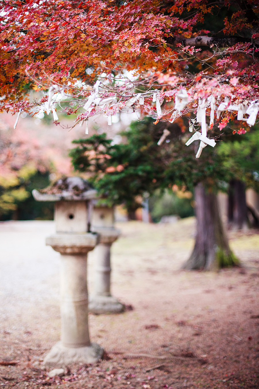 Omikuji tied to the branches of maple trees at Nara Park, Japan.