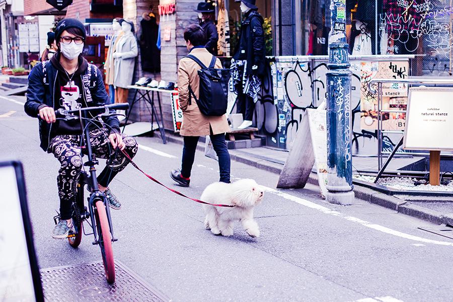 Japanese male riding a bicycle and walking his dog in Harajuku, Tokyo Japan.