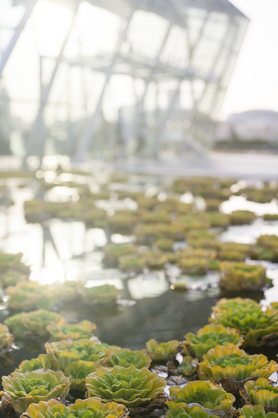 Plants outside the ArtScience Museum, Singapore.