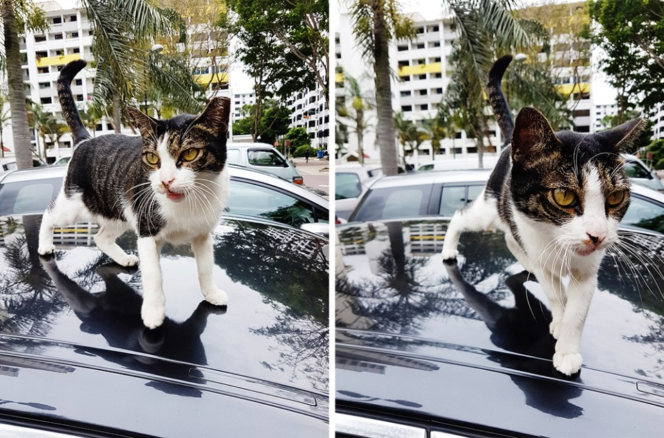 Kitty on top of a BMW car.