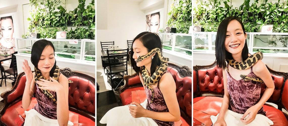 Male Jungle Carpet Python Snake at the Tokyo Snake Center in Tokyo.