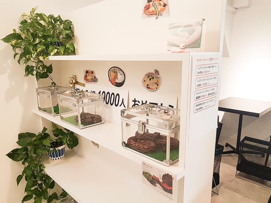 Shelf for attendant snakes in Tokyo Snake Center in Tokyo.