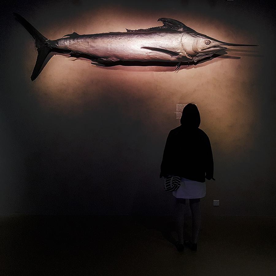 Swordfish at Lee Kong Chian Natural History Museum.