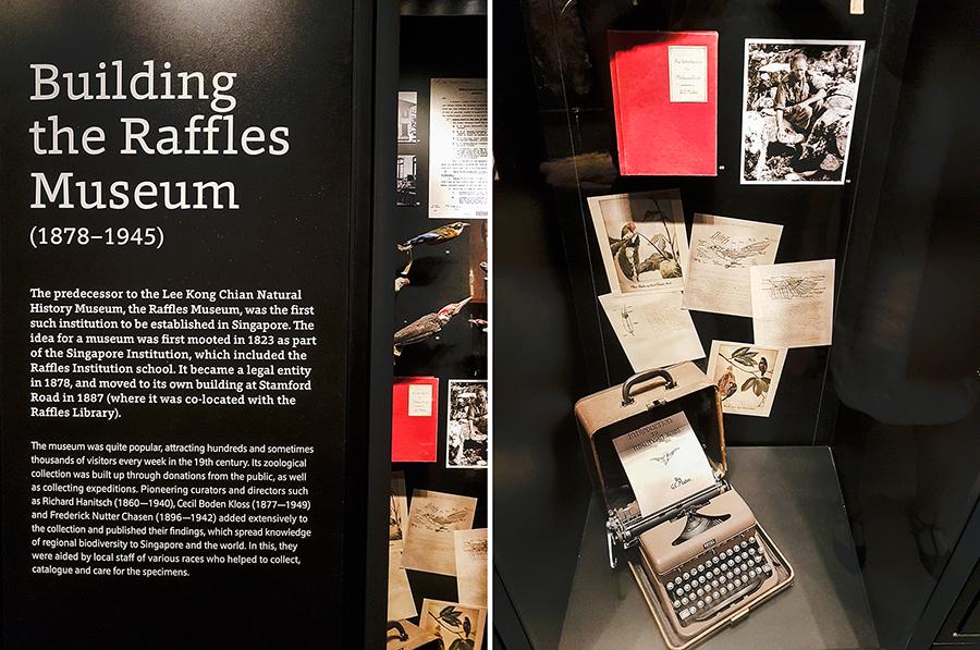 Exhibits at Lee Kong Chian Natural History Museum.