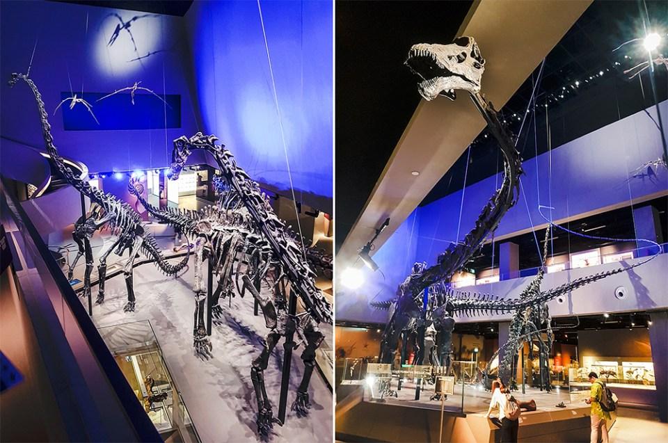 Dinosaur bones at Lee Kong Chian Natural History Museum.