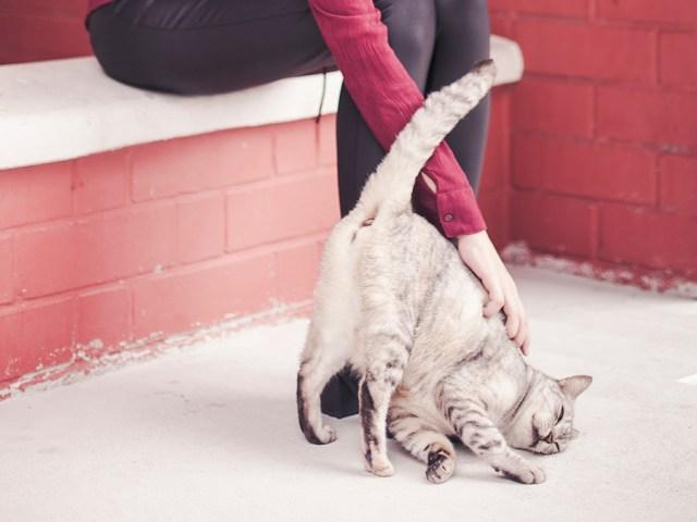 Petting the neighbourhood cat.