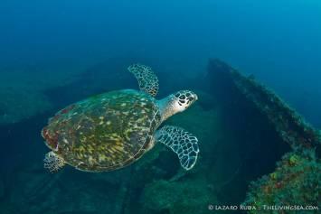 PA Turtle
