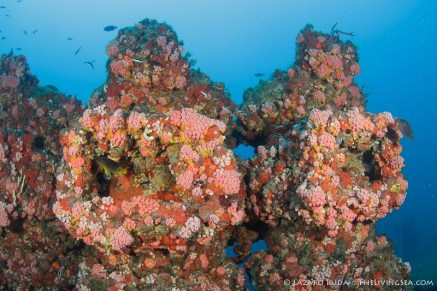 Coral and sponge growth on the wreck