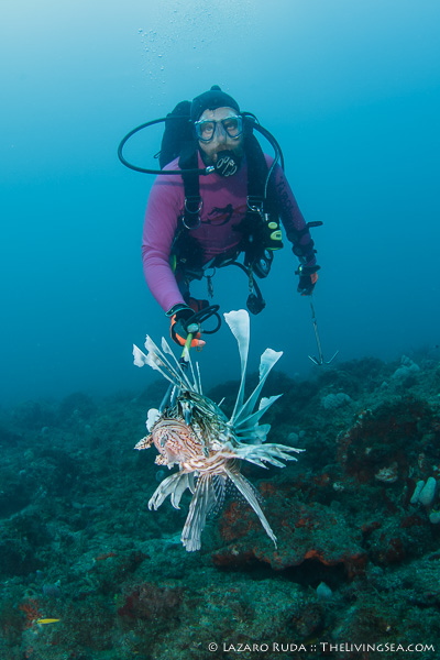 Dive guide, Finch, culling those invasive lionfish