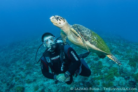 Dive master Ian and a friendly hawksbill sea turtle