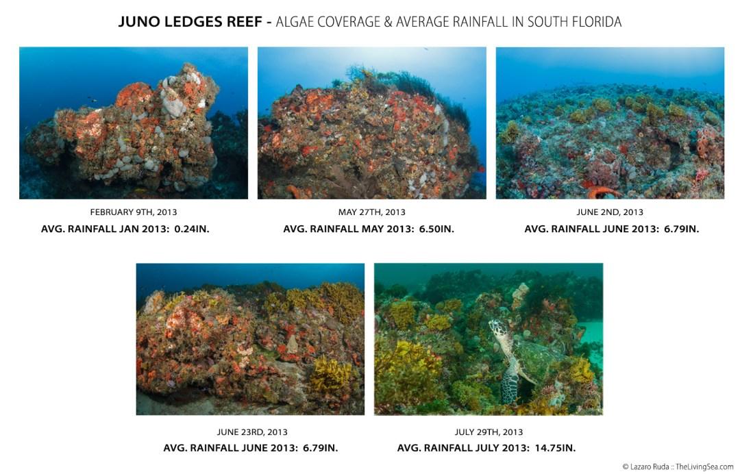 Juno-Ledges-Comparison