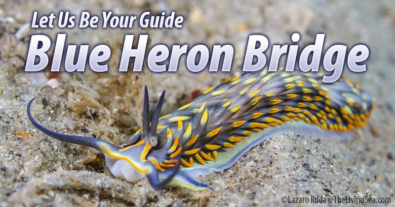 guide-blue-heron.jpg?resize=800%2C421&is
