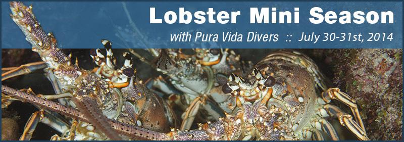 Mini-Lobster-Season2014