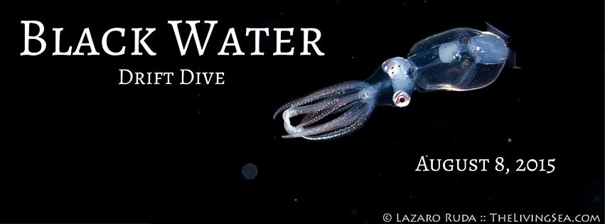 Black Water Drift Dive (2)