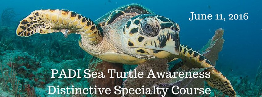 2016 PADI Sea Turtle Awareness Distinctive Specialty Course