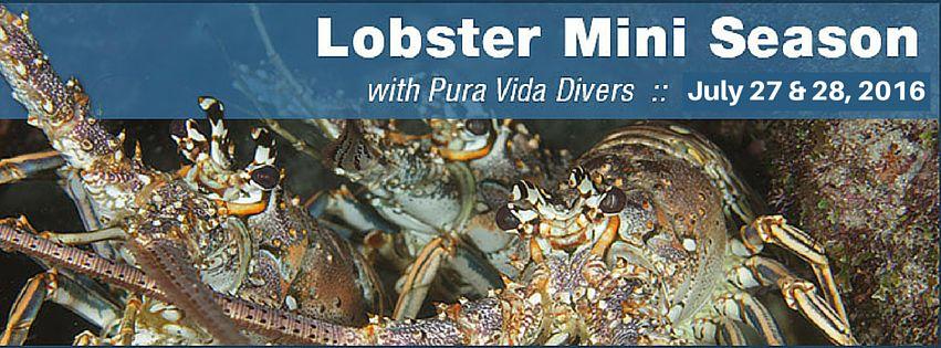 2016 Lobster Mini Season