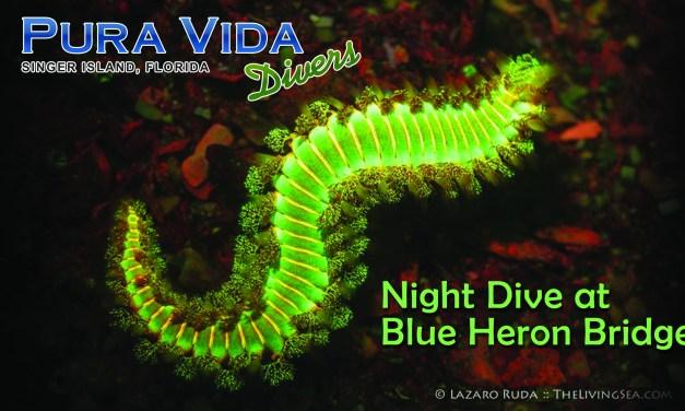 Feb 11: NIGHT DIVE at Blue Heron Bridge